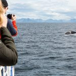 Whale Watching_By photographer Daniele Zanoni
