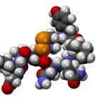 oxytocin love hormone