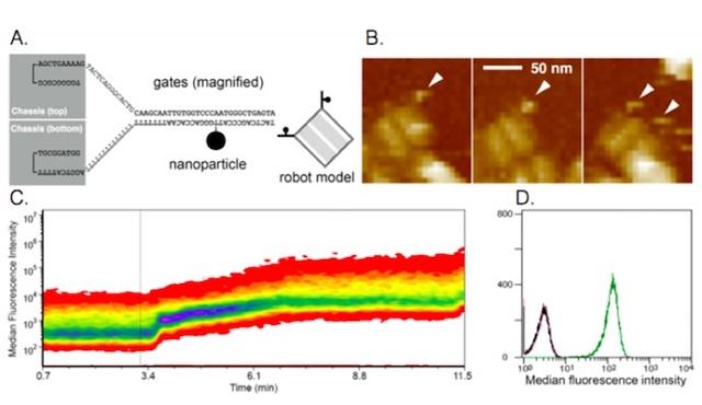 nanoscale robots