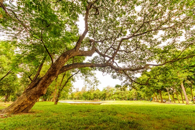 Green vacant land may reduce depression in city people