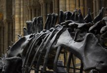What really causes the dinosaur extinction_