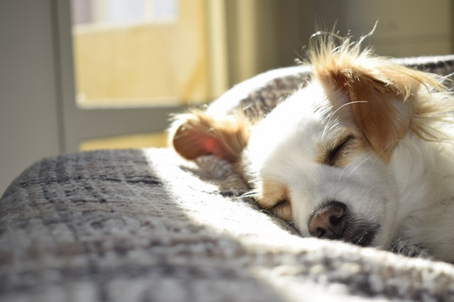 Scientists discover why humans and animals all need to sleep