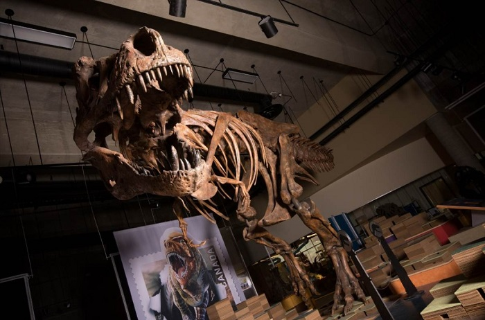scientists find biggest tyrannosaurus rex   world