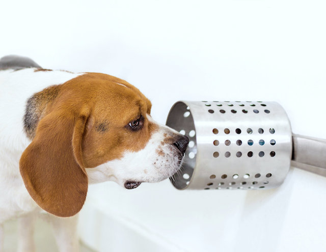 Dogs could smell cancer in blood