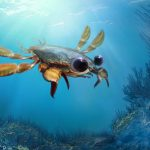 Scientists discover a 95-million-year-old crab species