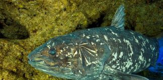 World's oldest fish shows how ancient skull evolved