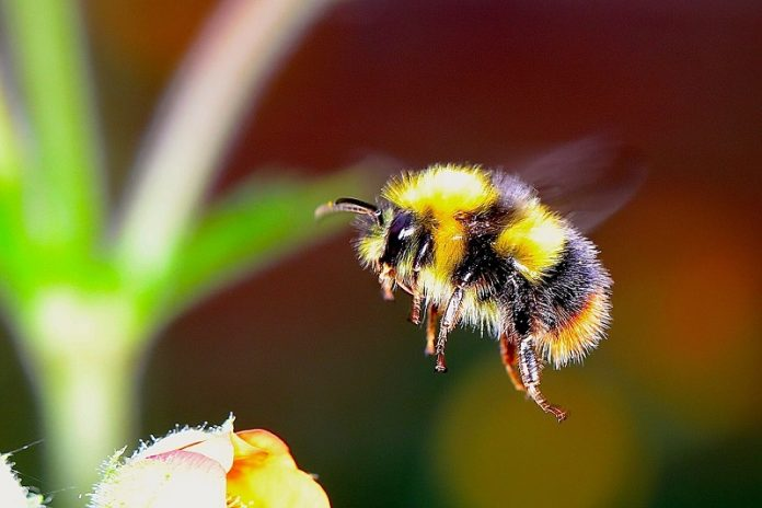 How the bumble bee got its stripes