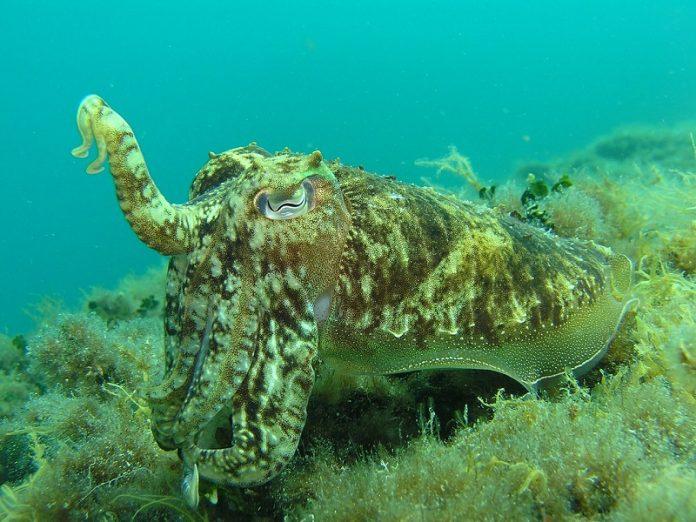 Low ocean oxygen levels can blind sea creatures