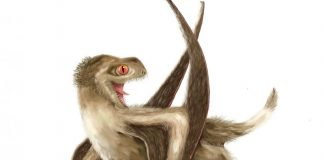 Feathers arose 100 million years before birds