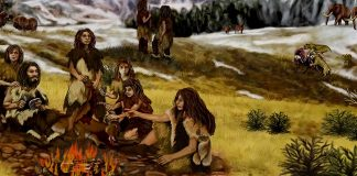 Scientists discover Neanderthals used resin 'glue' to craft their stone tools