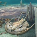 Scientists discover new 'king' of fossils in South Australia
