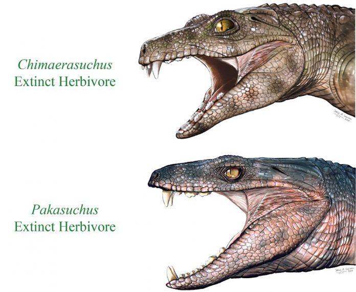Some extinct crocodile relatives were vegetarians, says study
