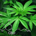 What you need to know about products containing cannabis or CBD