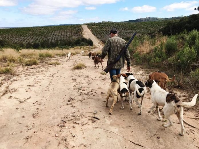 Wild boars, hunting dogs and hunters carry tick-borne bacteria