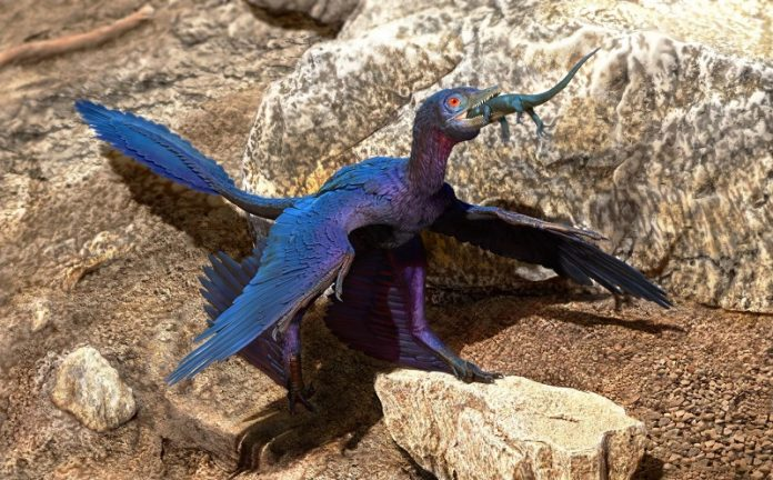 Scientists find new species of lizard in stomach of Microraptor