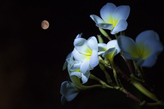 How Plants Know The Difference Between Night And Day