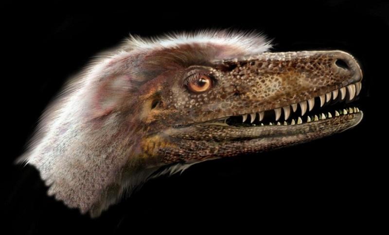 Paleontologists discover complete theropod dinosaur specimen
